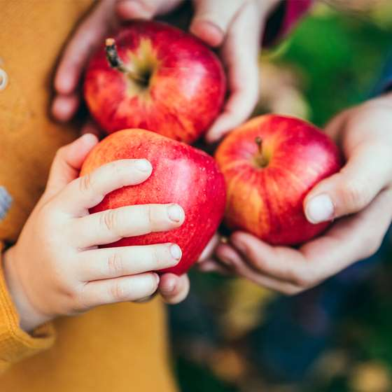 Hands holding three ripe red apples