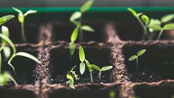 Ask the Experts: How to save energy when you are starting seeds