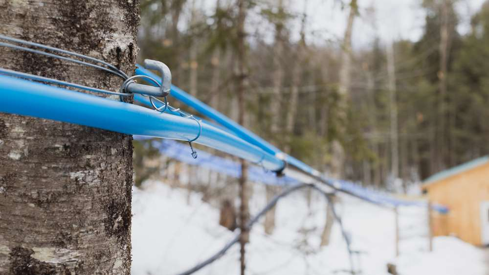 Photo of a sugaring setup