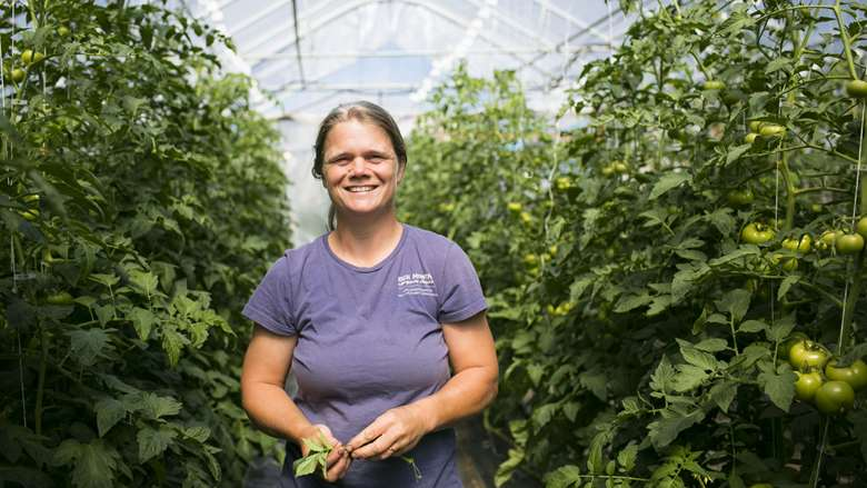 A smiling woman wearing worn blue t-shirt, holding a green plant, standing in greenhouse amongst growing tomato plants at Jericho Settlers Farm in Jericho, Vermont