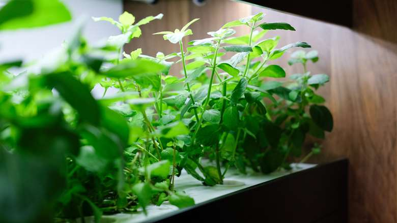 LEDs for Indoor Growing